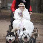suņu kamanas kāzās