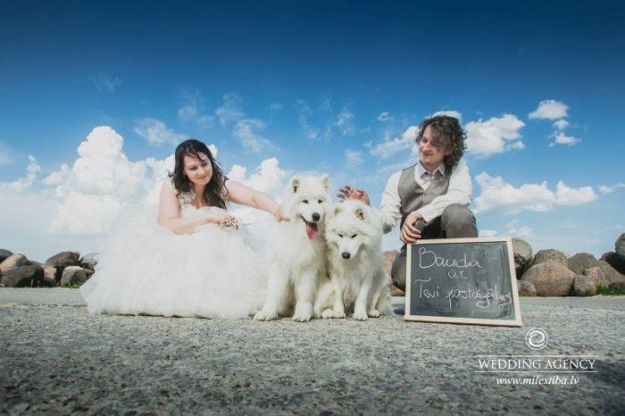 kāzu fotosesija ar baltiem suņiem