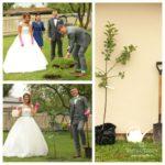 kāzu tradīcijas, koka stādīšana kāzās